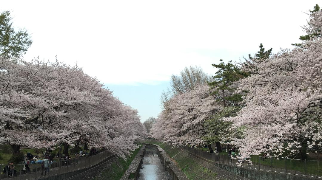 20160406sakura